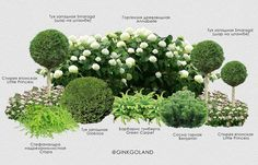 indoor outdoor carpet – If you need a good quality indoor outdoor carpet Small Front Yard Landscaping, Backyard Garden Landscape, Garden Landscape Design, Backyard Landscaping, Hydrangea Landscaping, Garden Design Plans, Small Garden Design, Boxwood Garden, Hydrangea Care