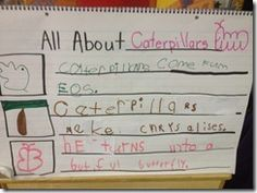 All about Caterpillars. Writing about nonfiction in a kinder classroom.