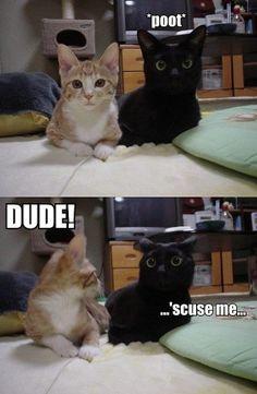 Must be male cats by JustLinnea