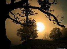 Steve Highfield - графство  Чешир