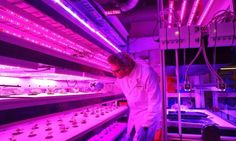 Target has collaborated with MIT to create a hydroponics garden in several of its store, offering produce directly to customers. Indoor Farming, Farming S, Urban Farming, Indoor Gardening, Modern Agriculture, Agriculture Industry, Hydroponic Gardening, Hydroponics, Human Centered Design