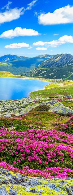 Romania                                                                                                                                                                                 More