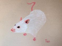 White mice Pastel pencils