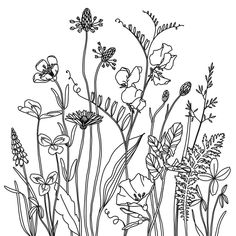 Doodle Art 562950022174129380 - Coseup of the wildflower medow I posted a few weeks ago. Source by euridicepico Flower Line Drawings, Botanical Line Drawing, Botanical Drawings, Simple Flower Drawing, Floral Drawing, Doodle Drawings, Doodle Art, Doodle Sketch, Zen Doodle