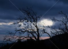 autumn dark sky dry tree Royalty Free Stock Photo