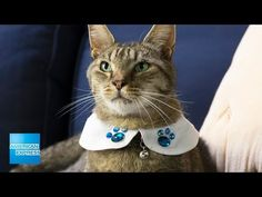 Classy Cat Collar | Epic Everyday | American Express - YouTube