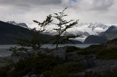 Ainsworth Bay is where the Marinelli Glacier and the Darwin Range ice field are located, both in the National Park Alberto de Agostini.