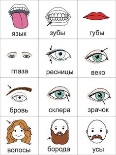 body parts pt 2 Russian Language Course, Russian Language Lessons, Russian Lessons, Russian Language Learning, Language Study, Russian Love, How To Speak Russian, Learn Russian, Alphabet Russe