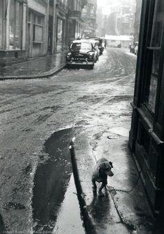 The dashchund Paris 1950s Robert Frank