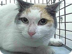 Pet Adoption has dogs, puppies, cats, and kittens for adoption. Adopt a pet Downey California, Kittens, Cats, Pet Adoption, Meet, Puppies, Blog, Animals, Cute Kittens