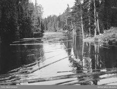 Tømmerfløting i Rømskog. Tømmer på vei ned elva i skogen.