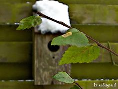 Karen`s Nature Photography: View Through Green Leaves Towards Blurry Nest Box With Snowy Roof.
