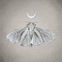 Lunar White Moth Print of Oil Painting by tinyartshop on Etsy Moth Tattoo Design, Future Tattoos, Conte, Tattoo Inspiration, Illustration Art, Illustrations, Art Drawings, Art Photography, Sketches