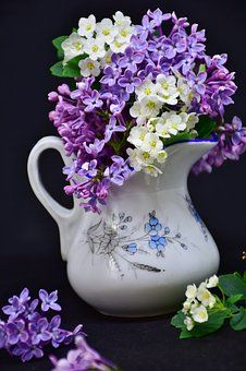 Lilac, Flowers, Flower, Floral