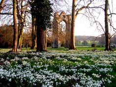 Snowdrop walk at Walsingham Abbey, England. I love the idea of planting bulbs in the grass so that you get little presents in the early spring :)