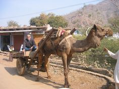 Traveling by camel in India #India #architecture #travel