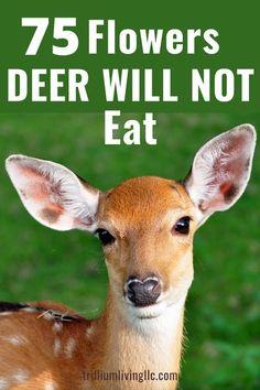 Deer Resistant Shade Plants, Deer Resistant Flowers, Deer Resistant Garden, Deer Resistant Perennials, Shade Perennials, Flowers Perennials, Planting Flowers, Flower Gardening, Deer Garden