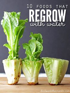Save money by regrowing these 10 foods that regrow in water without dirt. Perfect if you don't have room for a garden & trying to save a few bucks! Regrow lettuce, regrow celery… regrow vegetables with one of the best budget tips of the year, and easy for Growing Veggies, Growing Plants, Growing Herbs Indoors, Germinating Seeds Indoors, How To Grow Plants, Growing Fruit Trees, Regrow Vegetables, Easy To Grow Vegetables, Organic Vegetables