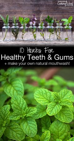 10 Herbs For Healthy Teeth & Gums + Make Your Own Natural Mouthwash | We all want healthy teeth and gums. But sometimes we brush, we floss, we eat healthy foods, and it still isn't enough. Maybe you just want a whiter, brighter smile, but want to avoid the ingredients in conventional products. Herbs to the rescue! These 10 herbs are healing and restorative, plus a recipe for herbal mouthwash. | TraditionalCookingSchool.com