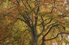 Beautiful tree in County Durham: The school holidays only finished last week, but autumnal...