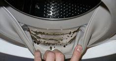 Comment éliminer les moisissures dangereuses et les odeurs de votre machine à laver facilement