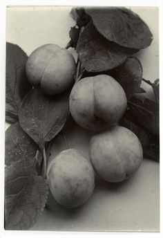 """Plums """"Early Red"""", circa 1910, Charles Jones"""
