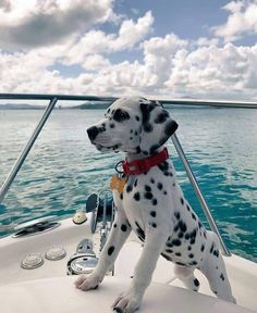 Good Pic dogs and puppies happy Thoughts Carry out you like the dog? Appropriate doggy care as well as training will assu Baby Animals Pictures, Cute Animal Pictures, Animals And Pets, Animals Images, Dog Pictures, Cute Baby Dogs, Cute Dogs And Puppies, Doggies, Dalmatian Puppies