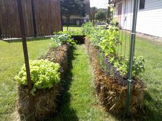 4 the Love of Family: straw bale gardening