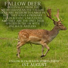 Animal Fact File, Animal Facts, Pet Dogs, Dog Cat, Pets, Deer Species, Fallow Deer, Dog Boarding, Pet Health