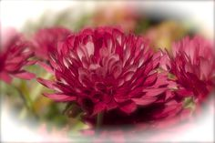 Mid Morning Mums 10-26-2014