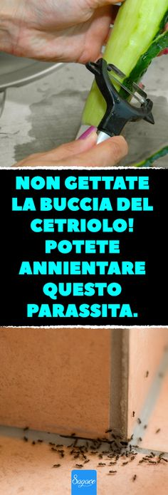 Don& throw the peel of the cucumber! You can annihilate this .- Non gettate la buccia del cetriolo! Don& throw the peel of the cucumber! You can wipe out this parasite. Pigeon Repellent, Chanel Makeup Bag, Makeup Bag Essentials, Small Makeup Bag, Best Cleaning Products, Marimo, Desperate Housewives, Wipe Out, How To Get Rid