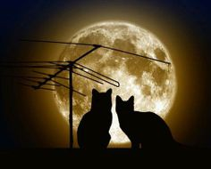 Silhouettes of kitties in the moonlight...