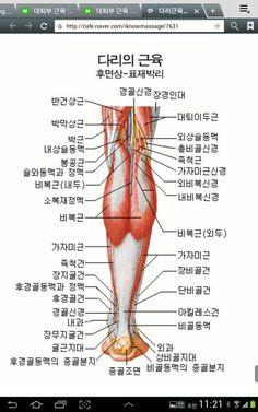 대퇴부 근육