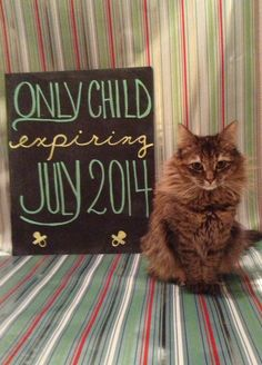 Baby announcement with our cat!