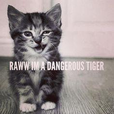 rawn im a dangerous tiger