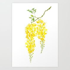 golden shower flower watercolor Art Print by colorandcolor Beautiful Flowers Photos, Flower Photos, Flower Watercolor, Watercolor Print, Water Flowers, Colour Block, Flower Cards, Drawing Tips, Artsy Fartsy