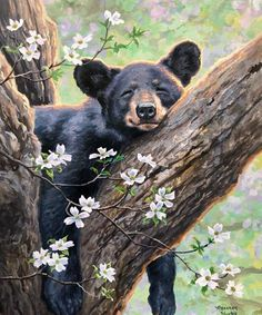 """ -- Each plaque is personally signed by the artist, Abraham Hunter! Bear Pictures, Animal Pictures, Nature Animals, Animals And Pets, Cute Baby Animals, Funny Animals, Black Bear Decor, Bear Paintings, Wildlife Paintings"