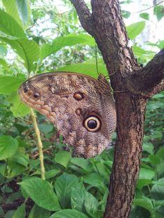 Vlinder Blijdorp, butterfly