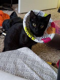 My Diy Improv For A Kitty E Collar Tube Sock Full Of