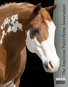 American Paint Horse - love that face Most Beautiful Animals, Beautiful Horses, Beautiful Creatures, Pretty Horses, Horse Love, Cheval Pie, American Paint Horse, American Quarter Horse, Majestic Horse