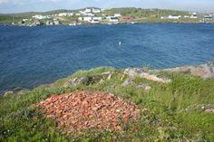 Red Bay  Terre Neuve et Labrador