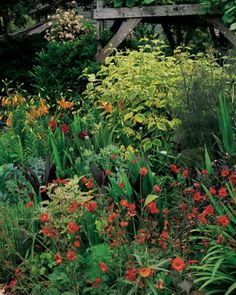 The main perennial garden features sunny Geum coccineum 'Red Wings,' purple fennel (Foeniculum vulgare 'Purpureum'), and the variegated dogwood Cornus stolonifera 'Hedgerows Gold' beneath an arbor of Concord grapes.