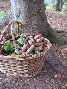 pinecone basket