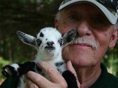 AGS reg. Nigerian Dwarf Goat Babies For Sale - NC USA - Livestock ...