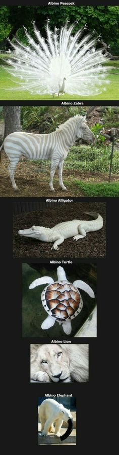 Bilderparade CCCXCVI - Absolutes Paradebeispiel - Funny,Funny memes,Funny pic,Funny world. Funny Animal Jokes, Cute Funny Animals, Funny Animal Pictures, Animal Memes, Funny Cute, Funny Pics, Animal Pics, Super Funny, Funny Images