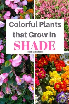 10 Best Plants that Grow in Shade 10 colorful plants that grow in shade. You ll love adding these gorgeous plants to your garden s shady colorful plants that grow in shade. You ll love adding these gorgeous plants to your garden s shady spots. Plants That Love Shade, Shade Garden Plants, Fall Plants, House Plants, Flowering Plants For Shade, Shade Plants Container, Garden Shrubs, Perennial Flowers For Shade, Partial Shade Perennials