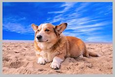 Just chilling on the beachside 😍- Welsh corgi Pembroke corgi Pembroke corgi dog corgis welsh Welsh Corgi Pembroke, Corgi Names, Dog Breeds List, Corgi Dog, Training Your Dog, Training Tips, Training Exercises, Training Schedule, Training Classes