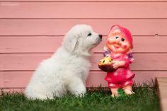 Наша девочка из Помета Б. ZuzzuStyle Babochka. 45 days Labrador Retriever, Dogs, Animals, Labrador Retrievers, Animais, Animales, Animaux, Chocolate Labradors, Pet Dogs