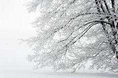So pretty... Snowy tree