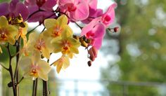 A cluster of yellow and pink orchids match the setting sun.